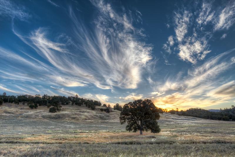 ~ Brushstrokes at Dawn ~