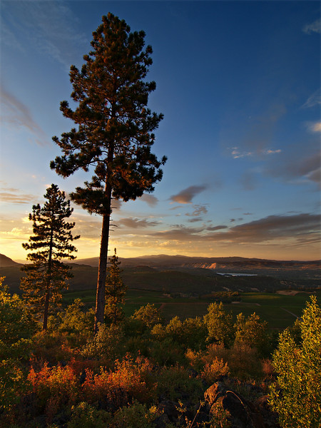 The Golden Hour - an overlook from Snows Lake Vineyard