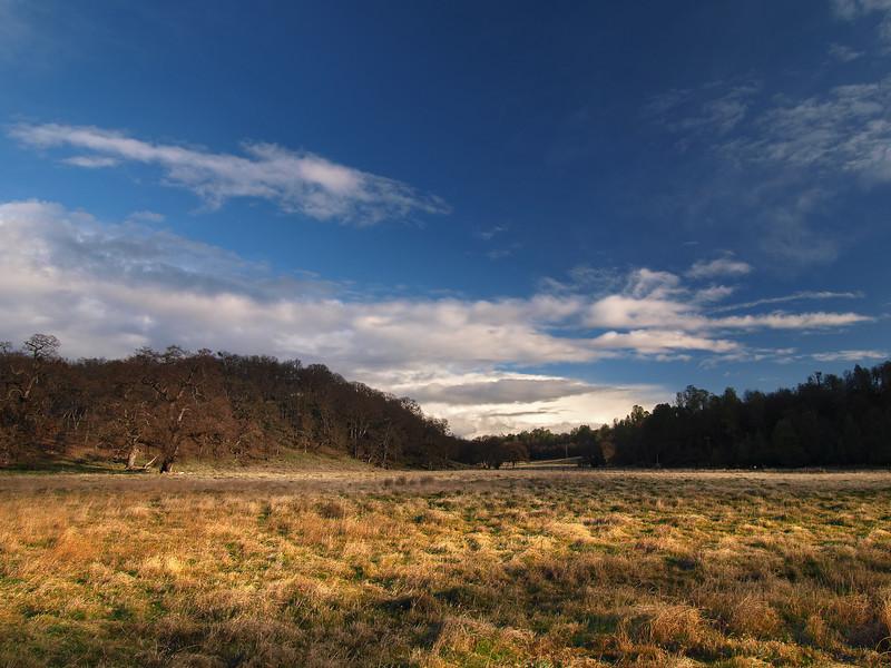 SideLight Meadow - Anderson Marsh