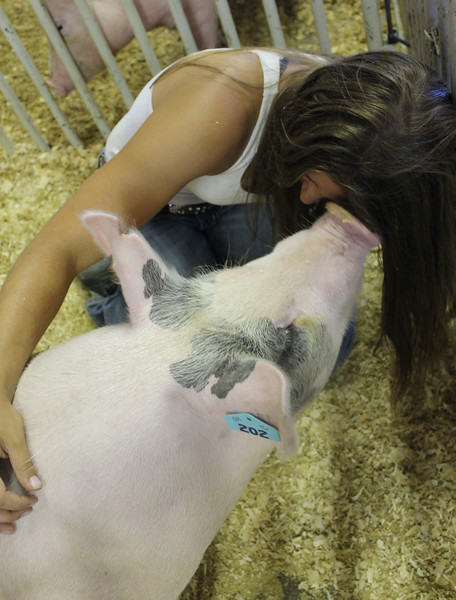 Kailee Leonard - The News-Herald <br> Taylor Woodward of Wings and Things 4-H club, shares a moment with her hog, Tuesday, July 25 at the Lake County Fair.