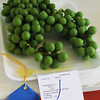 Kailee Leonard - The News-Herald <br> Proudly displayed grapes with their blue ribbon are available to be viewed throughout the week, July 25-30, at the Lake County Fair.
