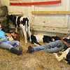 Kailee Leonard - The News-Herald <br> Two young exhibitors bond with some calves as they nap, Tuesday July 25, at the Lake County Fair.
