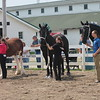 Kristi Garabrandt - The News-Herald<br /> Horses line up for the draft horse showmanship judging at the 2017 Lake County Fair July 26.
