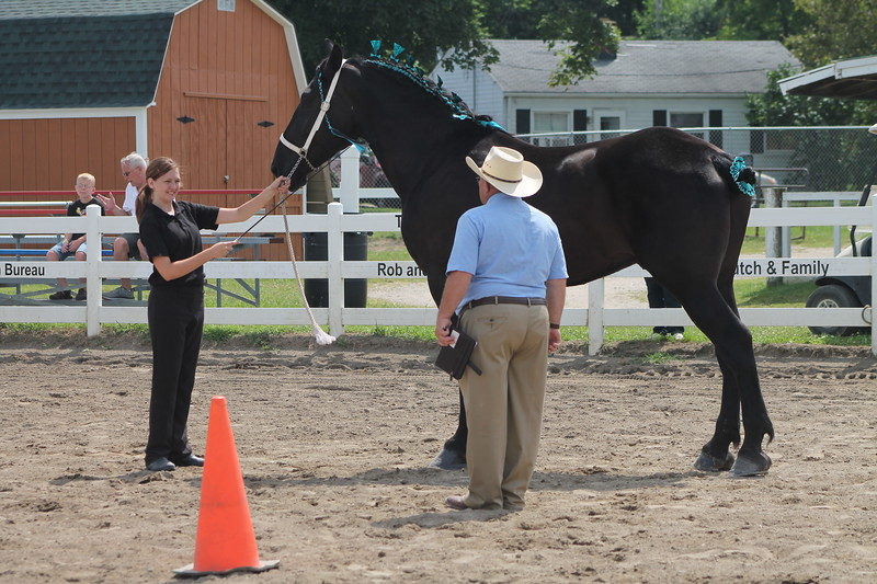 Kristi Garabrandt - The News-Herald<br /> Sydney Rider of Burton stands with her horse while the judge looks it over during the draft horse showmanship judging July 26 at the Lake County Fair.