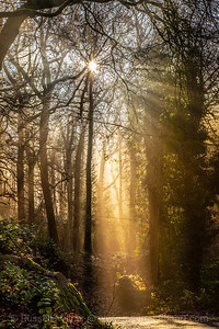 Autumn sunlight streams through the  trees whilst looking for Elves.