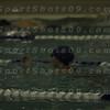 E:all-pix2010-12-21Lake Swimming-AllianceIMG_2162