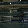 E:all-pix2010-12-21Lake Swimming-AllianceIMG_2172 (2)