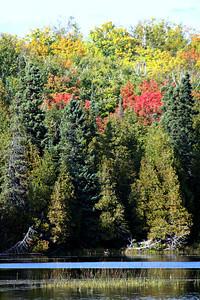 Fall At Ninemile