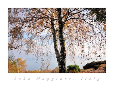 Alpine Gardens, Stressa, Italy