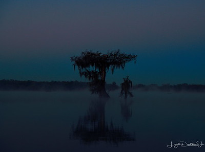 Predawn in Da Swamp!
