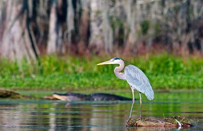 Lake Martin & The Cypress Island Preserve  3-15-18