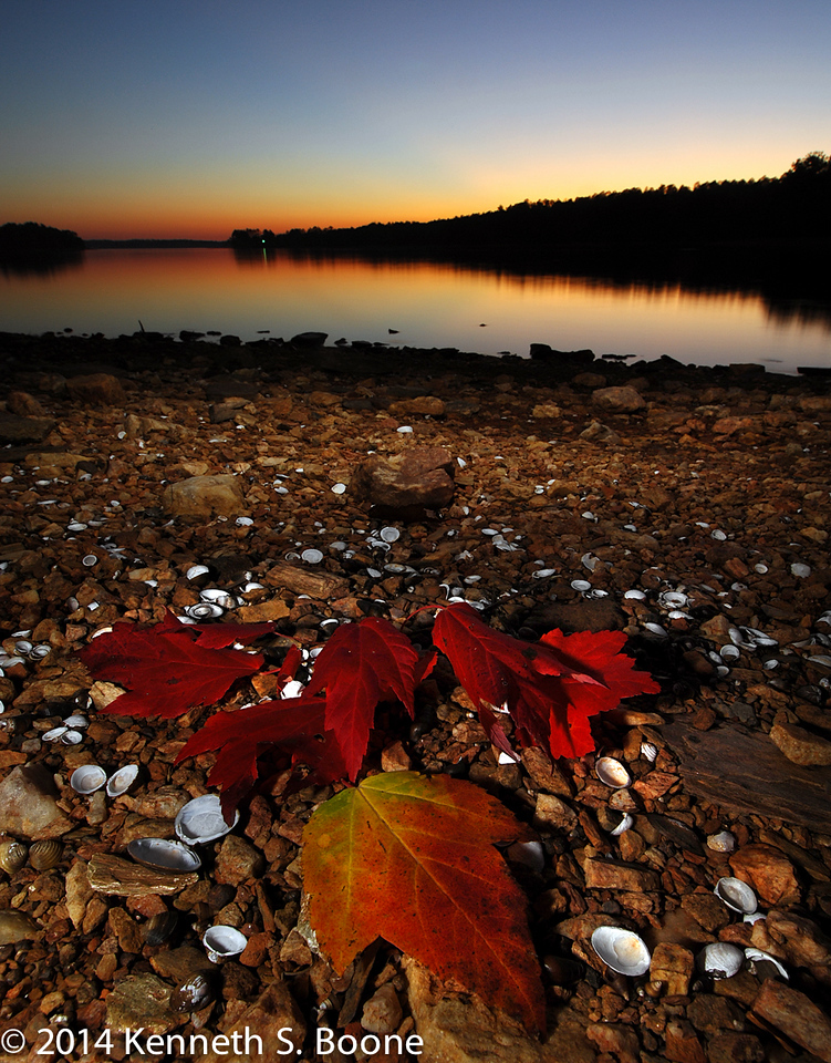 Maple leaves and mussle shells on the shoreline
