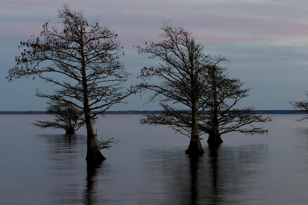 Lake Mattamuskeet Dusk