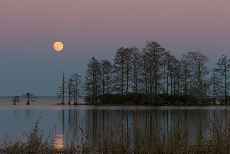 Lake Mattamuskeet Full Moon