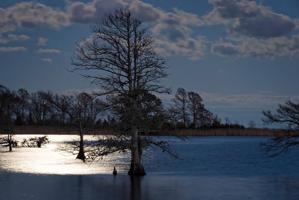 Lake Mattamuskeet Reflection