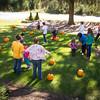 Pumpkin_MTL_018