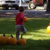 Pumpkin_MTL_015