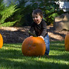 Pumpkin_MTL_010