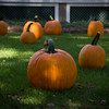 Pumpkin_MTL_004