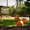 Pumpkin_MTL_003