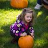 Pumpkin_MTL_017