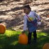 Pumpkin_MTL_009