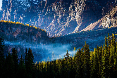 Larches, backlighting with fog