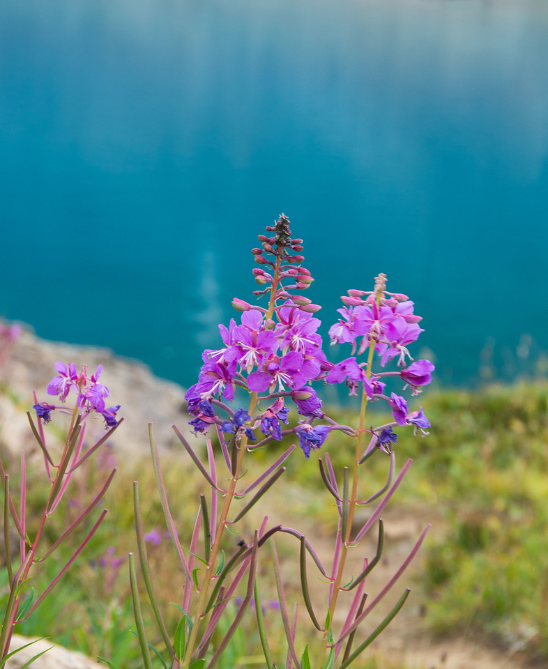 Scattered bunches of Fireweed made for a nice contrast against the vivid blue lake.