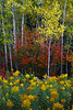 Fall Colors - Lake Superior Fall Tour - John Hewitt - September 2013