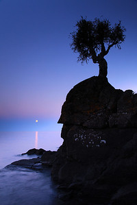 """SPIRIT TREE 0254  """"May Moonrise at the Spirit Tree"""""""