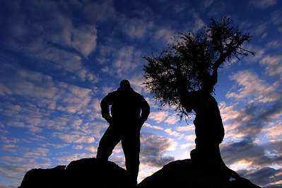 "SPIRIT TREE 8850  ""Staring at the sun"""