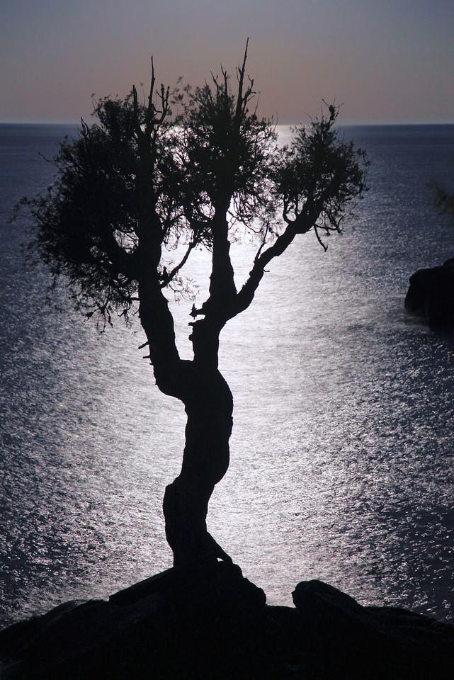 "SPIRIT TREE 9286<br /> <br /> ""Reflections of May Moonlight"""