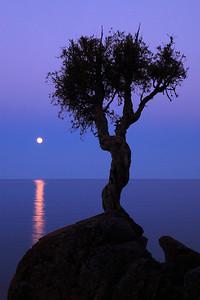 "SPIRIT TREE 0262  ""May Moon and the Spirit Tree"""