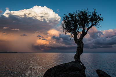 "SPIRIT TREE 9108  ""Summer Storm and the Spirit Tree"""