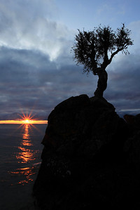 "SPIRIT TREE 8732  ""A new day""  Sunrise at the Spirit Tree - October 11, 2009"
