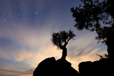"""SPIRIT TREE 0939  """"Painted by Moonlight""""  4 minute exposure of the moonlight, clouds and stars taken on June 17, 2011."""