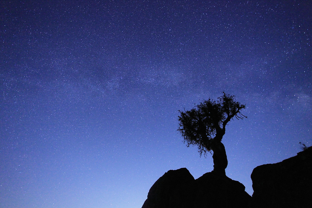 "SPIRIT TREE 0773<br /> <br /> ""Early evening Milky Way over the Spirit Tree"""