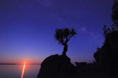 "SPIRIT TREE 0760  ""Midsummer Moonrise at the Spirit Tree"""