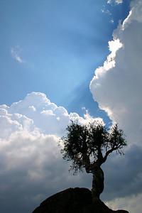 "SPIRIT TREE 1726  ""Light from above"""