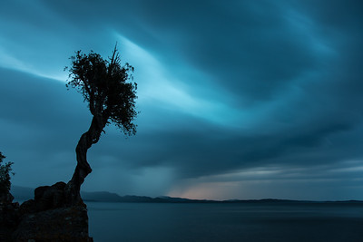 "SPIRIT TREE 8307  ""Summer Storm over the Spirit Tree"""