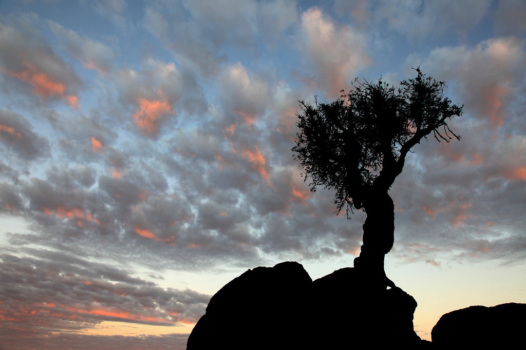 "SPIRIT TREE 2762<br /> <br /> ""Speckled Cloud Sunset at the Spirit Tree"""
