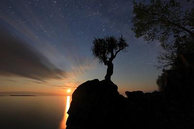 "SPIRIT TREE 2198  ""Midnight moonrise at the Spirit Tree"""