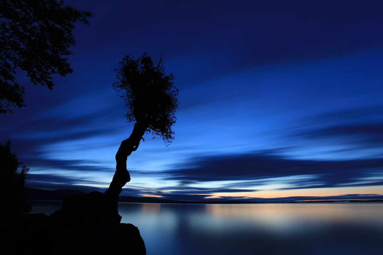 "SPIRIT TREE 3113<br /> <br /> ""Blue Dawn"""