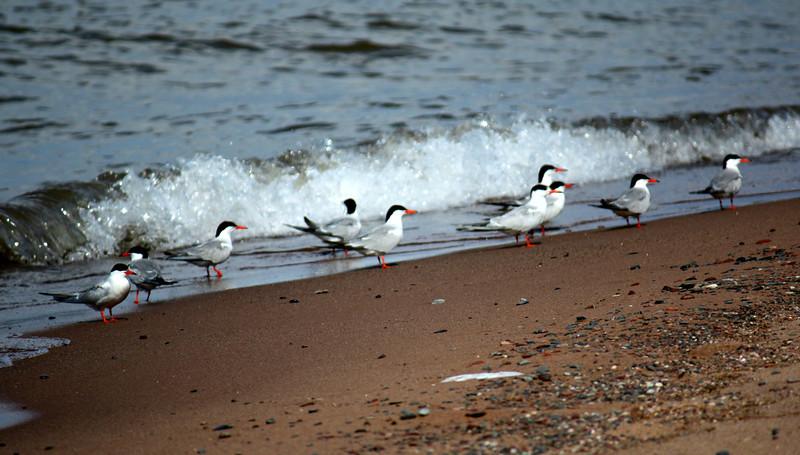 Tern Here