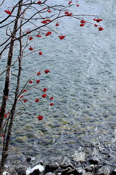 Rowan In Fall