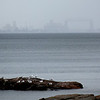 Harbor Haze