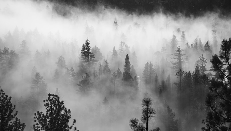 Foggy Trees at Lake Tahoe California
