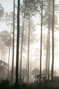Foggy Morning Lake Woodruff Wildlife Refuge