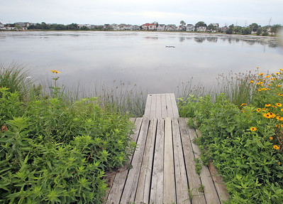 Residents have complained about the condition of the Lake of the Lilies. The mayor said at the last council meeting that the lake is healthy, but residents beg to differ based off of a large population of algae contaminating the lake.  (MARK R. SULLiVAN /THE OCEAN STAR)