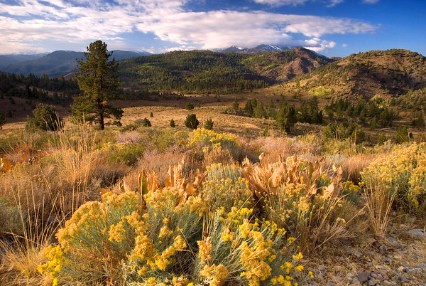 Sagehen Flat near Monitor Pass, Lake Tahoe Area